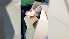 Boy found in back of car in cardboard box