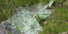 CTV Barrie: Shelburne crash