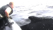 CTV Vancouver: Another entangled whale rescued