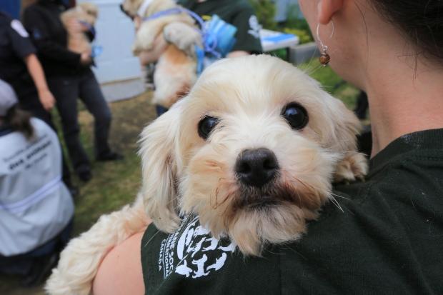 Quebec Humane Society