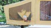 CTV Edmonton: Bear startles campers in Banff