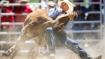 Seth Brockman, from Wheatland, Wyoming, wrestles a steer during Calgary Stampede rodeo action in Calgary, Friday, July 3, 2015. (Jeff McIntosh / THE CANADIAN PRESS)