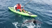 Caught on Cam: Aggressive shark capsizes kayaker