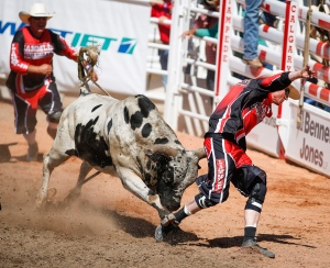 The bull Town City Hottie chases a bull fighter after throwing his rider during Calgary Stampede bull riding rodeo action in Calgary, Friday, July 3, 2015. (Jeff McIntosh / THE CANADIAN PRESS)