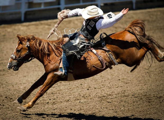 Horse euthanized after breaking leg at Calgary Stampede
