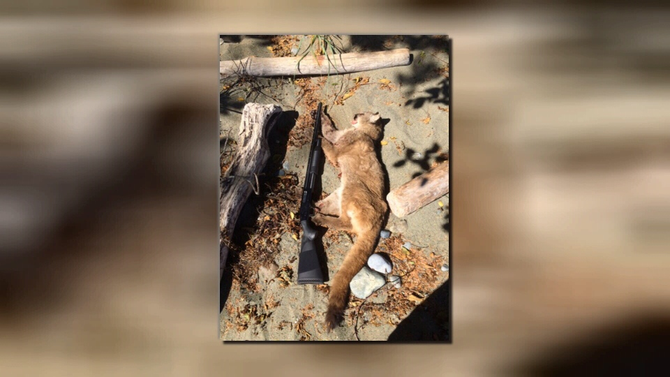 Shawn Hanson took a photo of a cougar he fatally shot after the animal snatched away his dog and showed no fear of humans.