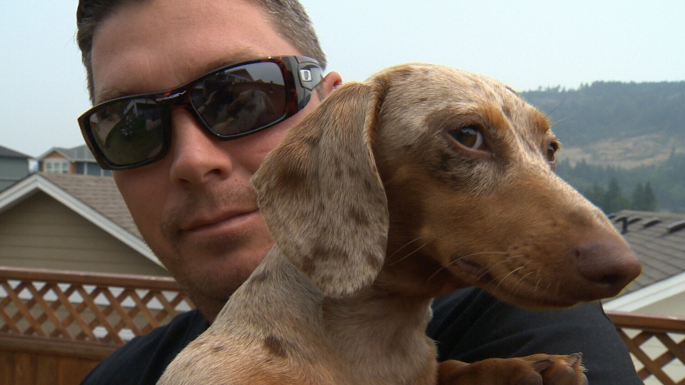 Shawn Hanson poses with his miniature Dachshund, Bailey, after a harrowing encounter with a starving cougar near Ucluelet Friday, July 6, 2015. (CTV)