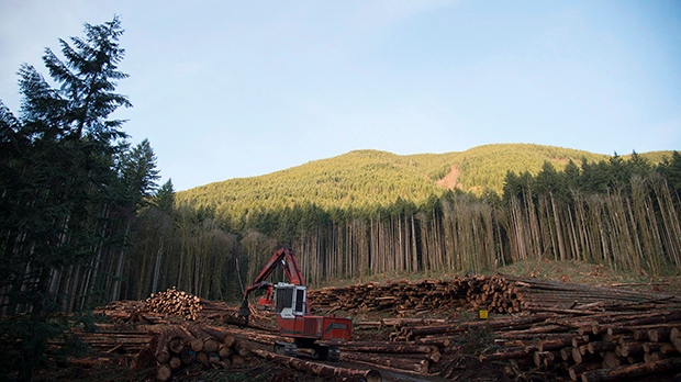 A section of forest is harvested by loggers near Youbou, B.C. (Jonathan Hayward/THE CANADIAN PRESS)