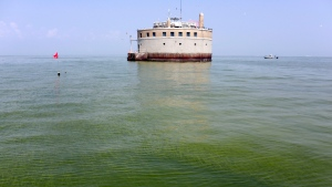 In this Aug. 3, 2014 file photo, the City of Toledo water intake crib is surrounded by algae in Lake Erie, about four kilometres off the shore of Curtice, Ohio. (AP / Haraz N. Ghanbari)