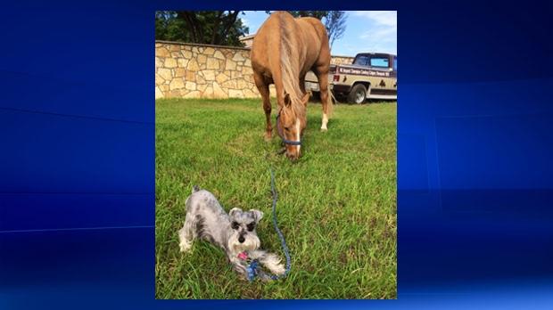 Tuf Cooper's horse Rio (courtesy Tuf Cooper's rodeo team)