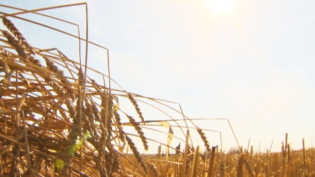 Canada AM: Western drought puts crops at risk