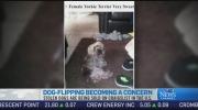 CTV News Channel: 'Dog-flipping' crimes online
