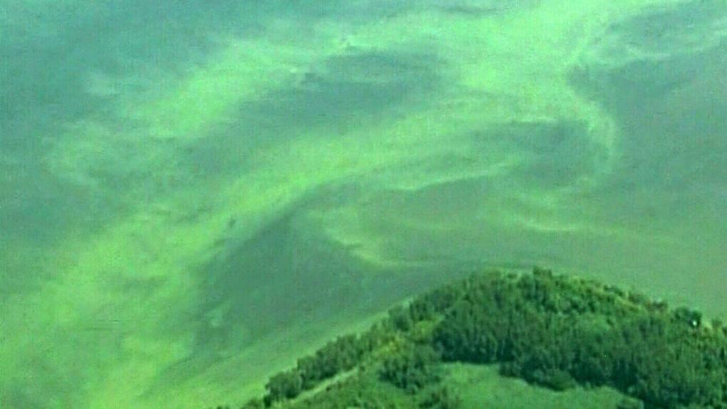 CTV Windsor: Lake Erie algae issue