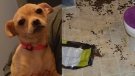 The London Humane Society says a dog was left in a bathroom for two weeks while a couple was on vacation. (London Humane Society)