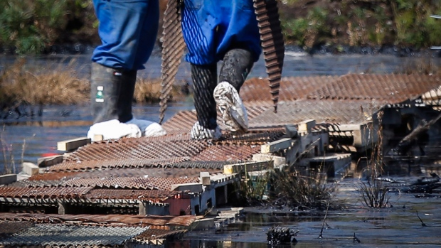 Workers wear protective clothing at Nexen spill