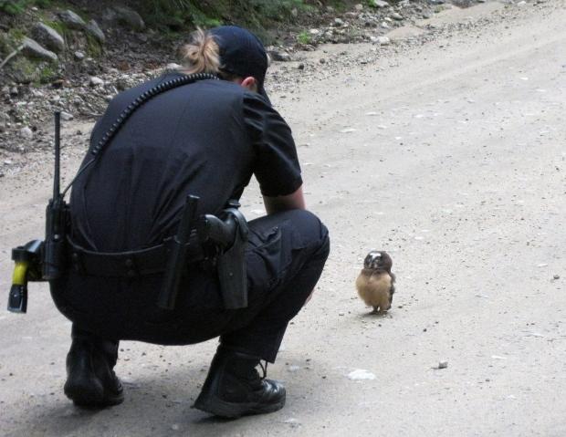 Deputy and owl