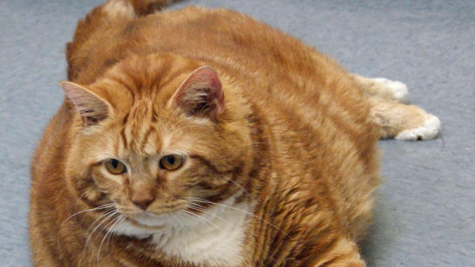 Fat cat named Skinny