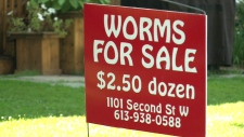 Worms for sale sign