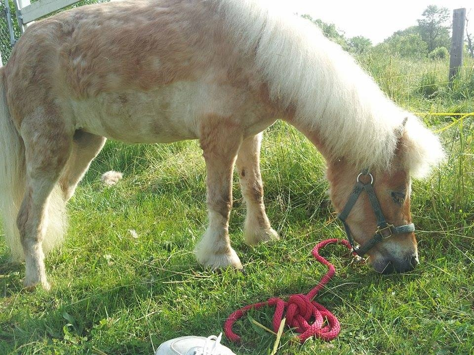 horse prothesis