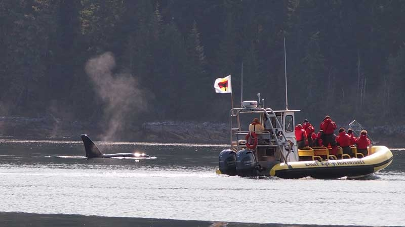 Coquitlam resident Chris Bellet said she saw an Eagle Eye Adventures boat venture too close to an orca pod near Desolation Sound on Aug. 14, 2015.