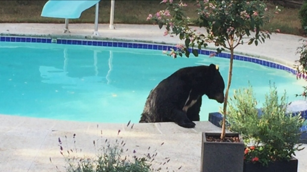 Bear in a pool
