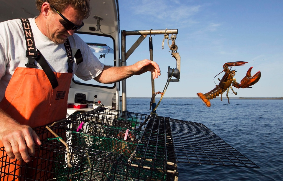 Claws out race for best spots kicks off lobster season in for Lobster fishing in maine