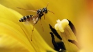 They're annoying and can certainly put a damper on your picnic or backyard BBQ.  From fruit flies to wasps gardening expert Mark Cullen offers some tips to help you deal with late summer pests.
