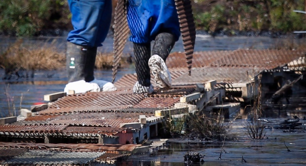 Workers wear protective clothing while cleaning up an oil spill near Fort McMurray, Alta., in this file photo from Wednesday, July 22, 2015. (Jeff McIntosh/THE CANADIAN PRESS)