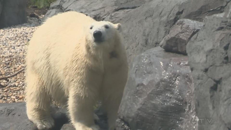Assiniboine Park Zoo polar bear