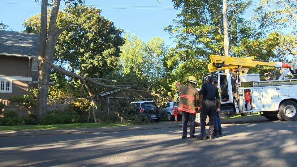 Two vehicles were smashed by a large falling tree limb in Oak Bay last month. Aug. 24, 2015. (CTV Vancouver Island)