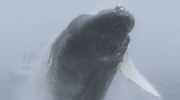 CTV News Channel: A whale of a show