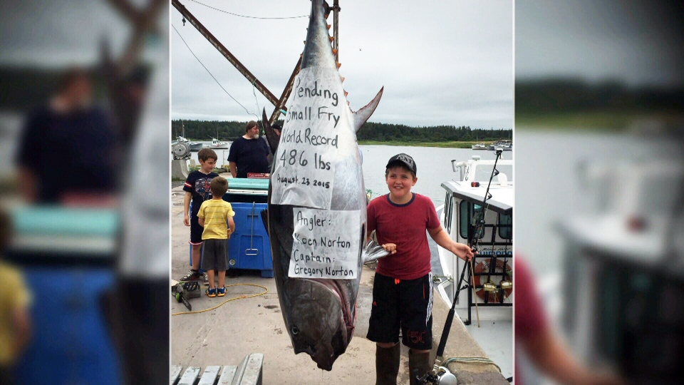 A 10-year-old angler from Prince Edward Island may have landed himself a record-setting catch, after he hauled in a 486-pound (220-kilogram) bluefin tuna over the weekend.