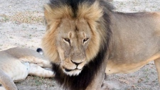 Cecil the lion in Hwange National Park