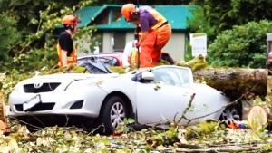 CTV Vancouver: Windstorm wreaks havoc