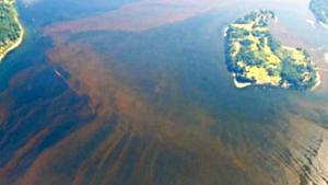 Pacific Ocean algae bloom