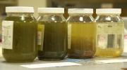 CTV National News: Algae bloom flourishing