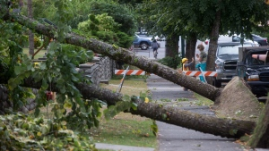 Trees that fell on houses during Saturday's windstorm block a sidewalk in Vancouver, B.C., on Sunday August 30, 2015. (Darryl Dyck / THE CANADIAN PRESS)