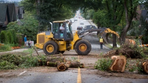 City workers clean up the remains of a large tree that was uprooted during Saturday's windstorm, in Vancouver, B.C., on Sunday August 30, 2015. (Darryl Dyck / THE CANADIAN PRESS)