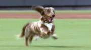 Canada AM: Happy dog tries to run the bases