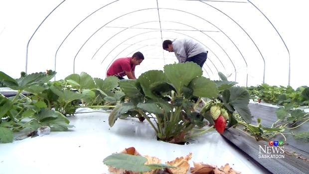 Super a foods bell gardens ca