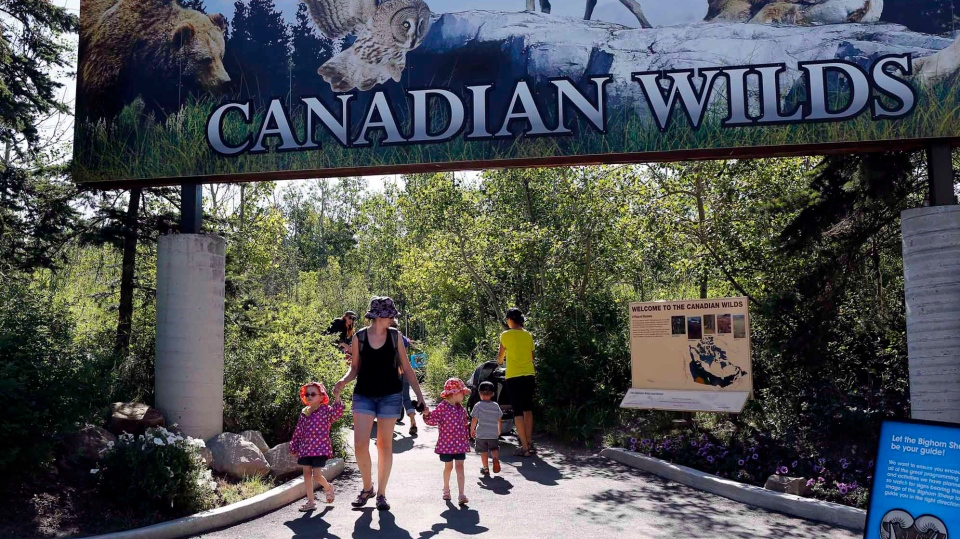 Visitors explore the Calgary Zoo on Wednesday, July 31, 2013. (Jeff McIntosh / THE CANADIAN PRESS)