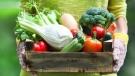 Gardening expert Mark Cullen shows us why harvest time is a season of celebration. (Dasha Petrenko/shutterstock.com)