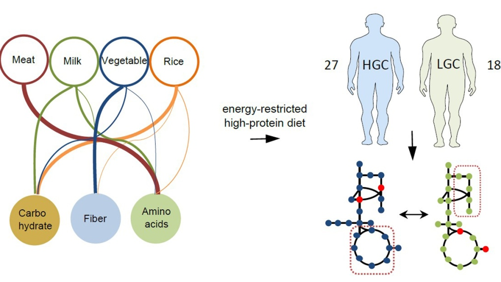 Diets based on gut bacteria composition
