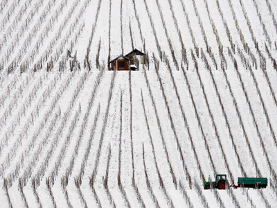 A farmer steers his tractor through snow covered vineyards near the village of Kleinbottwar, some 40 kilometres  north of Stuttgart, Germany, Saturday, Nov. 22, 2008. (AP / Thomas Kienzle)