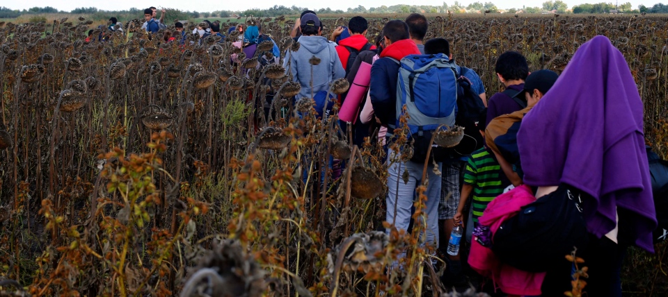 Migrants walk through a field behind the border line between Serbia and Hungary in Roszke on Saturday, Sept. 12, 2015. (AP / Matthias Schrader)