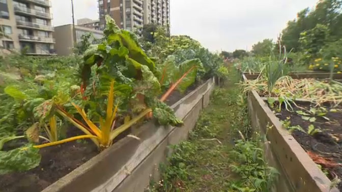 In total, 57 plots at Versailles St. and St-Antoine and 63 plots at St-Jacques and Jean-d'Estrees would be affected.