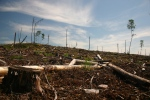 A clear cut section of forest is seen on Grassy Narrows First Nation territory near Dryden, Ont., in this 2006 handout image. (The Canadian Press/Handout/FreeGrassy.org)