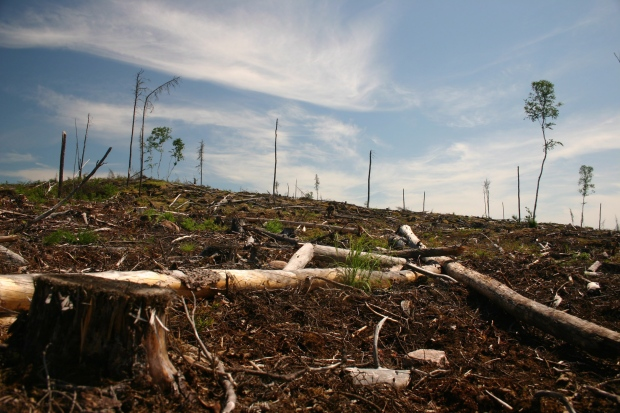 Grassy Narrows going to court over logging
