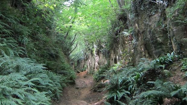 A holloway in Dorset, England