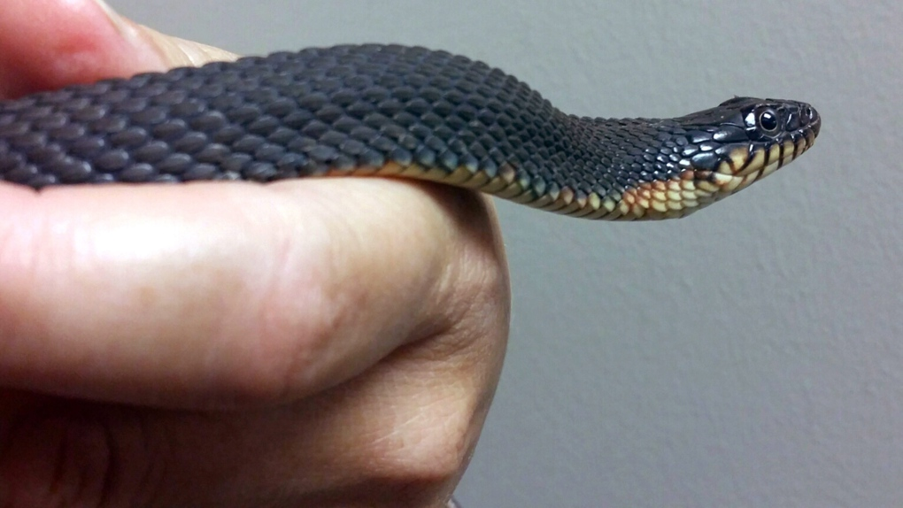 Outbreak of salmonella in six Canadian provinces linked to snakes and rodents